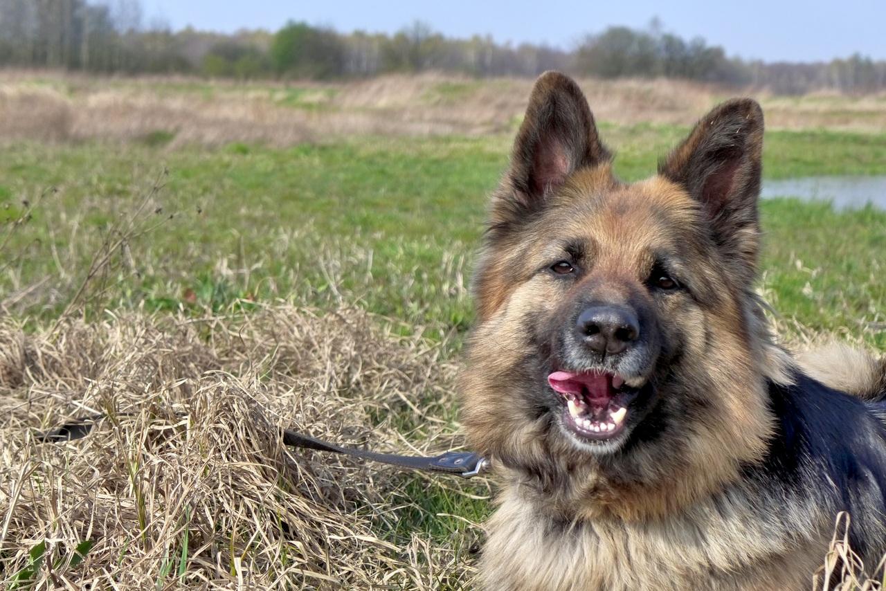 bad breath in dogs doggie breath